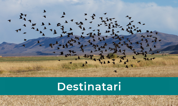 Destinatari Master in Gestione Ambientale Strategica